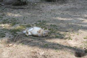 Un lapin qui se repose
