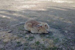 Et encore un lapin