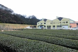 Clean Tea Matsuno Tea Factory