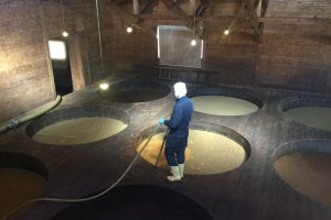 Soy beans fermenting in large wood vats.