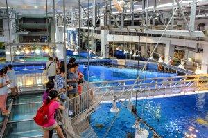 Take a free tour behind the scenes of the Kuroshio Sea tank