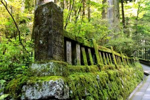 Luxuriant moss covers this low stone wall