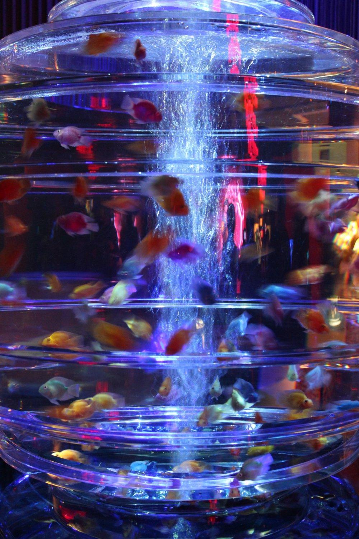 ГИЯМАНРИУМ:показывает золотых рыбок в многограннике.