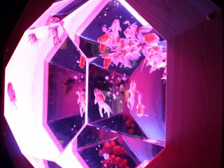 NEW EDO KINGYO DISPLAY: Polyhedron dengan bingkai kayu terinspirasi dari Zaman Edo