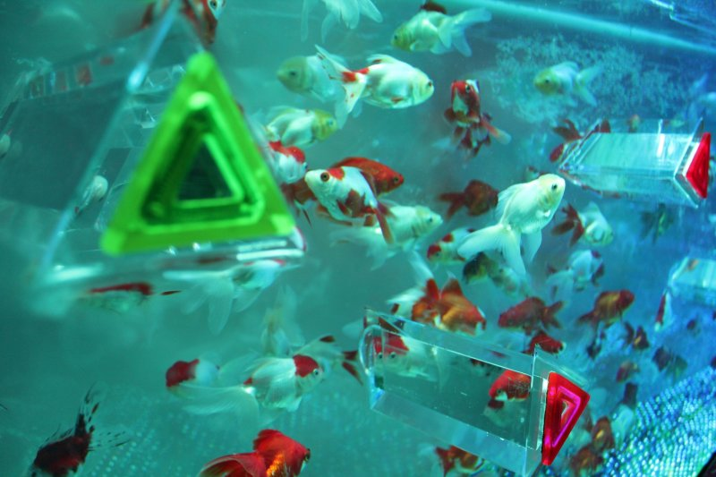 <p>КАЛЕЙДОРИУМ: смотрите на рыбок через треугольный калейдоскоп.</p>