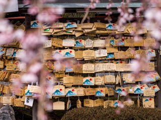 Visitors leave prayer boards, carrying their prayers to the gods, beneath one of the shrine's cherry blossom trees