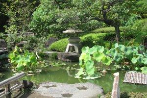 Японский сад летом