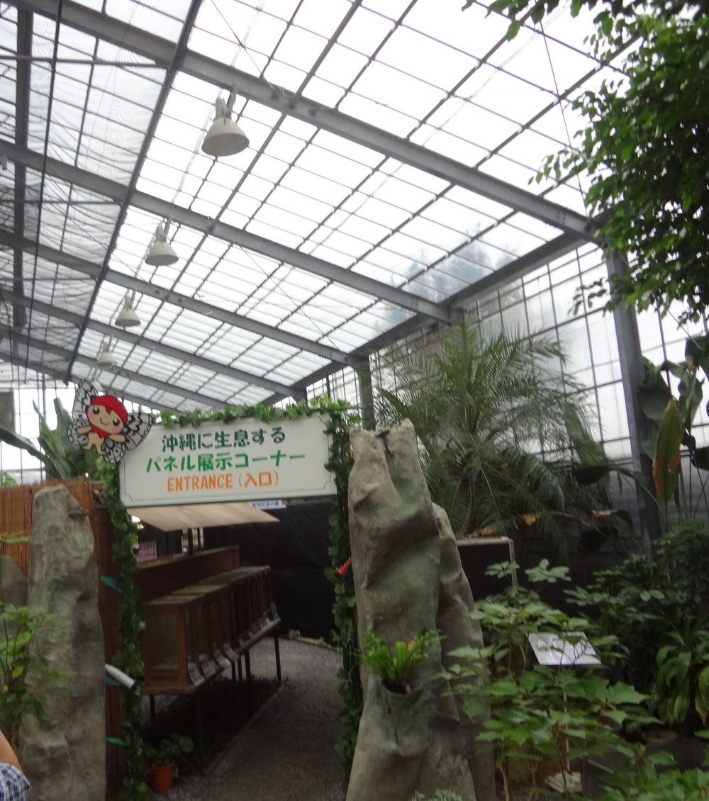 The enclosed area of the Ryugujo Butterfly Garden where the butterflies land on you if you wear the red hats provided