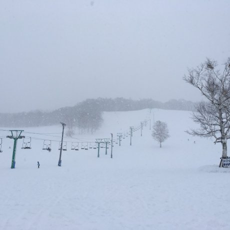 Fujiwara Ski Resort & Sunbird Hotel