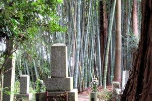 Вокруг кладбища всегда много деревьев