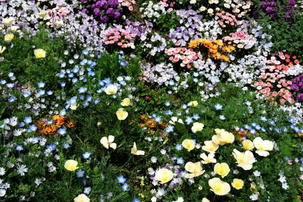 Lovely mixture of spring flowers