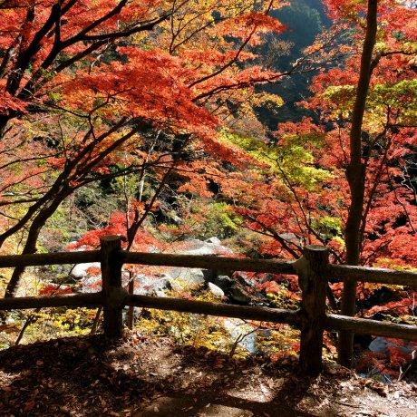 Autumn Colors at Shosenkyo Gorge