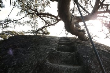 More steps, then duck under that tree
