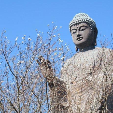 The Miracle of Amida Buddha
