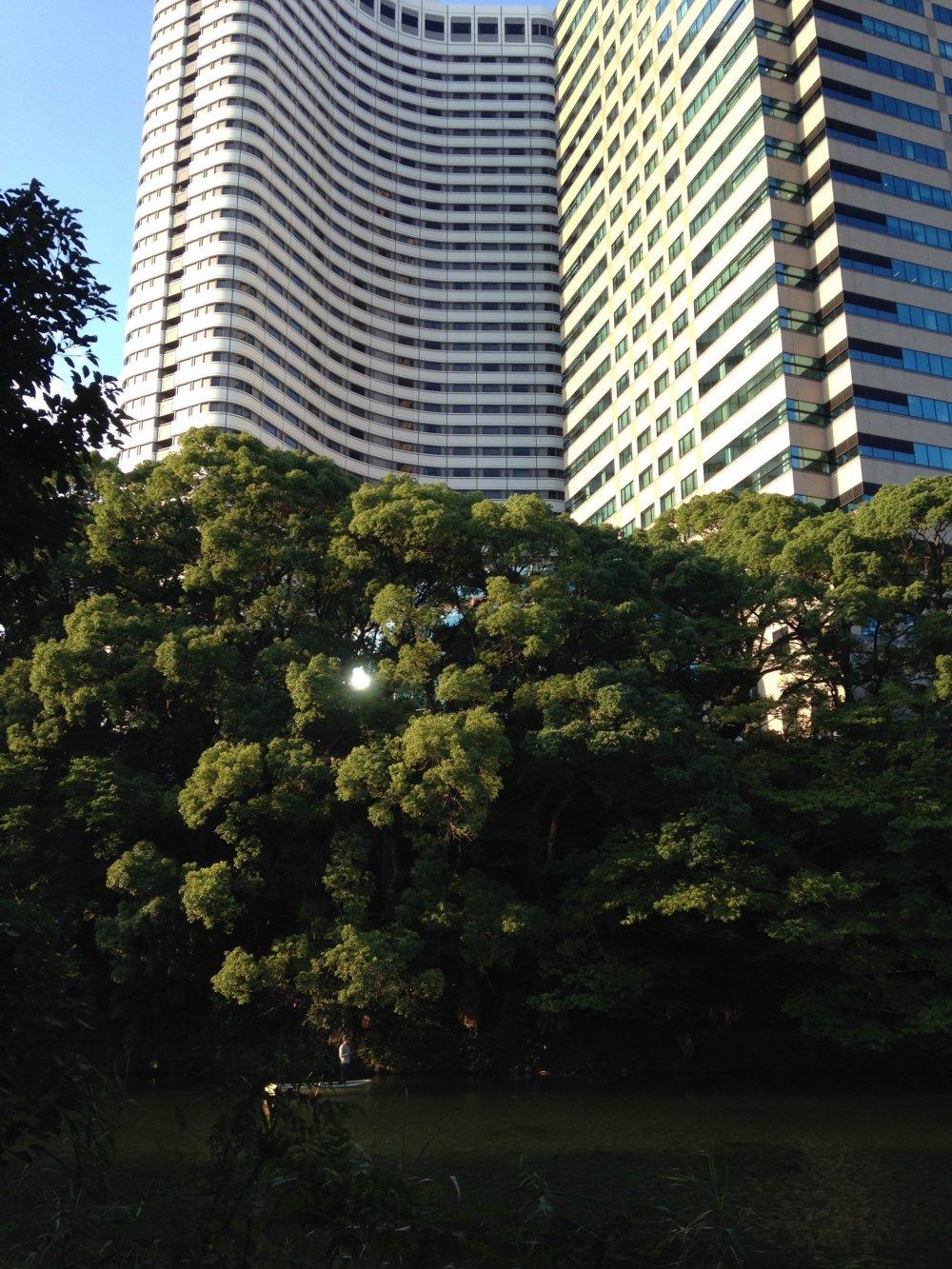 Небольшой оазис на фоне небоскреба