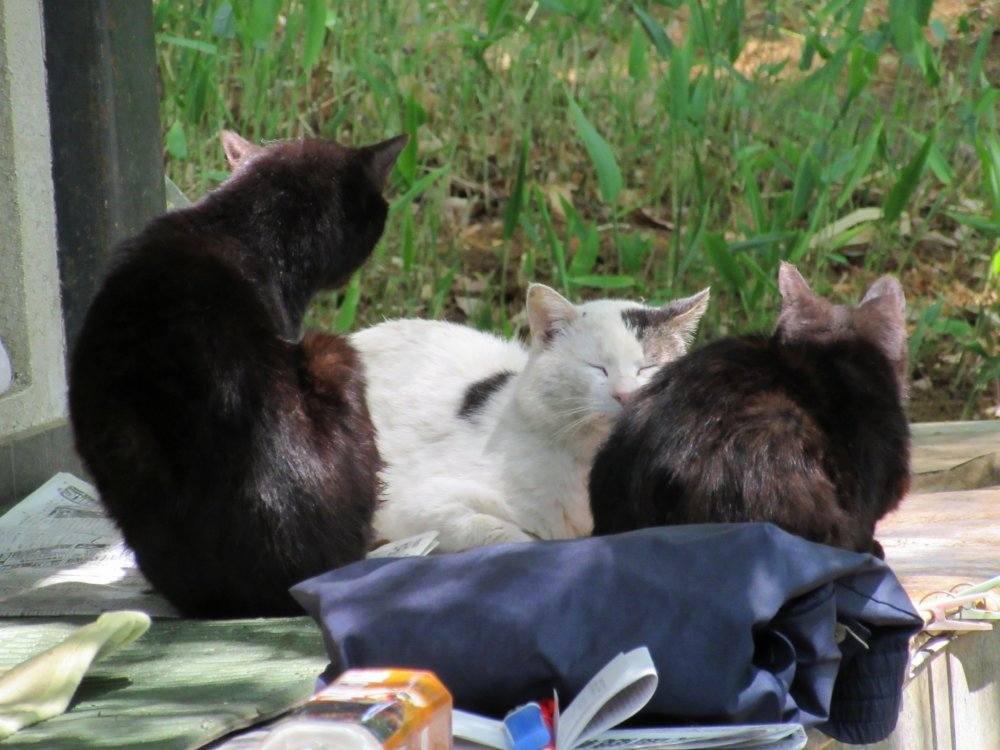 Stray cats in Omiya Park
