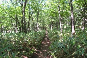 Frepe Falls 1km pathway