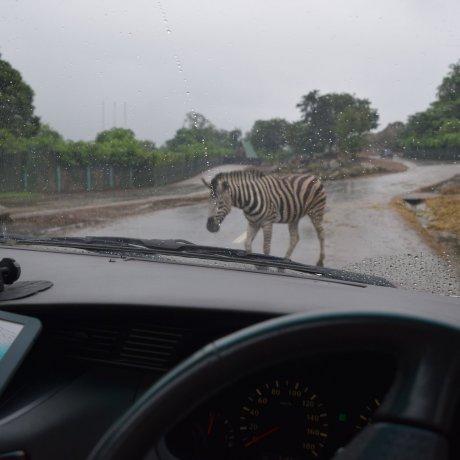 Drive-thru Zoo: Gunma Safari Park