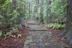A pathway along Kumano Kodo