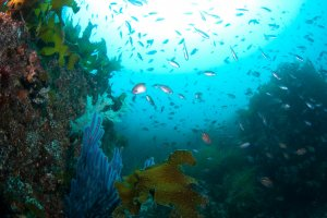 Wonder of nature under the sea of Omijima