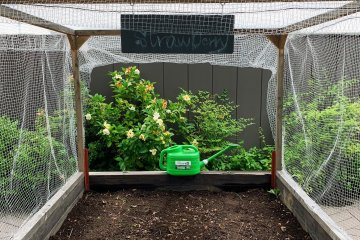 This garden bed is growing strawberries for the community!