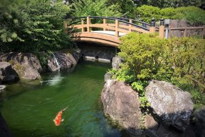 A beautiful Japanese garden with, you guessed it, koi fish