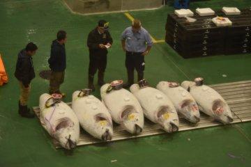 Massive tuna fish at the auction site
