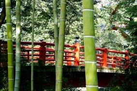 Con đường mòn Shuzen-ji xuyên qua rừng tre