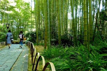 짧은 길의 장벽은 또한 대나무로 만들어졌다.