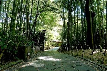 신비한 대나무 숲