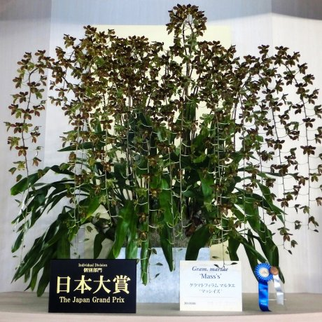 Japan International Orchid and Flower Show