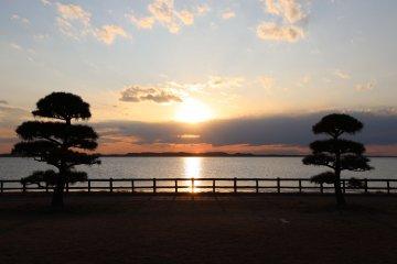 夕陽與日本松樹剪影