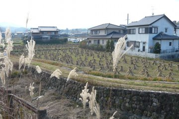 Сельская местность Асуки