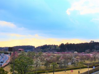 A great view of Kairakuen Garden