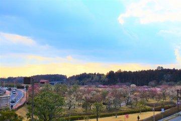 A great view of Kairakuen Garden