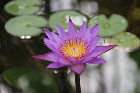 Taman Air di Kebun Botani Tenggara