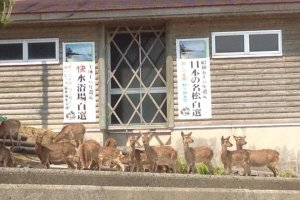Plenty of deer