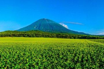 ภูเขาโยเทในอุทยานแห่งชาติชิกตสึ-โทยะ ฮอกไกโด