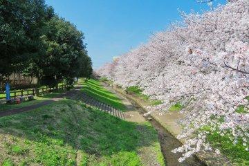 Egawa Sakura as far as the eye can see