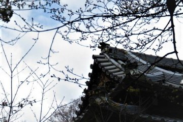 roofline defines the location of the cherry blossoms