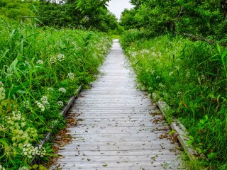 The Onnenai wooden path walkway is 3km in total, but visitors can break up the walk by taking various shorter routes