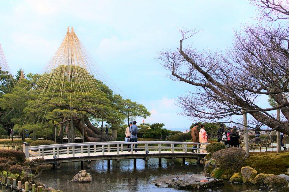 唐崎松の風景