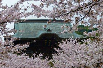 วัดเคนโชจิที่คามาคุระในฤดูใบไม้ผลิ