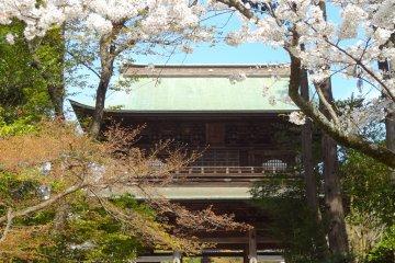 วัดเอนงาคุจิที่คามาคุระในฤดูใบไม้ผล