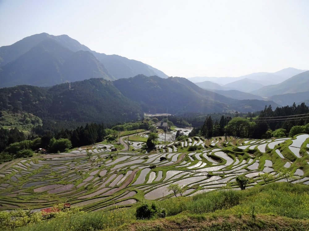 "View of the Senmaida, the ""1,000 rice paddies"" from the top."