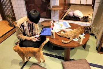 You can study or work at the cat cafe, surrounded by adorable cats