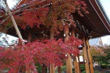 梵钟与红叶