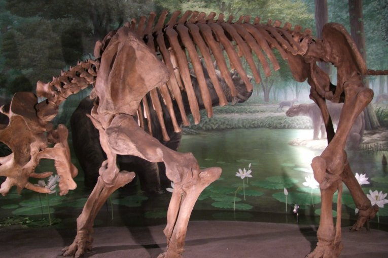 Музей Динозавров в Фукуи