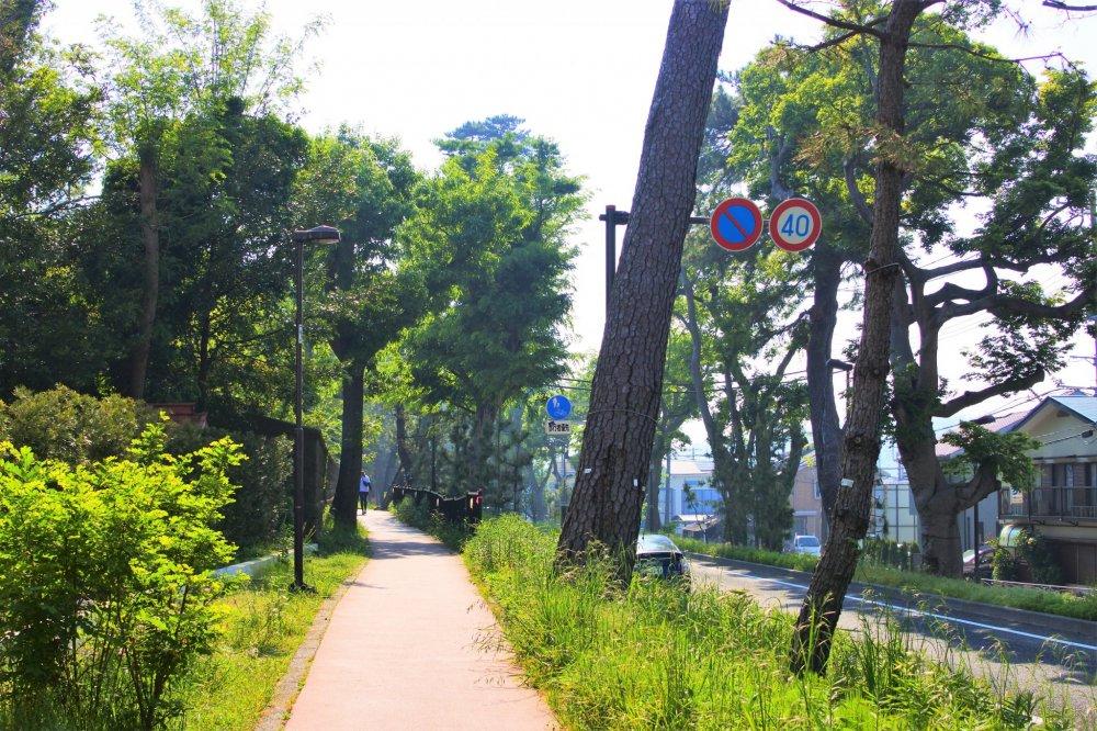 東海道の松並木