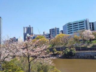 江戸城外堀跡の眺め